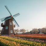 Dlaczego warto podjąć legalną pracę w Holandii?