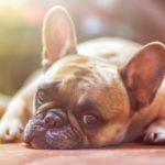 Co warto wiedzieć o psach